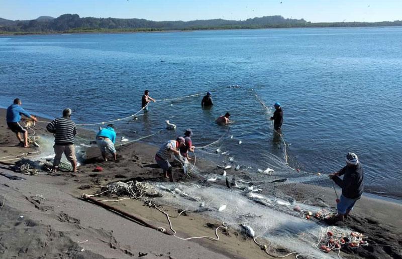 Académicos de Oceanografía UdeC investigan recursos en Desembocadura del Biobío