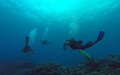 Departamento de Oceanografía celebra el mes del mar con actividades online para toda la comunidad