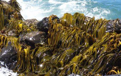 Científico UdeC integra a grupo premiado por estudio sobre algas