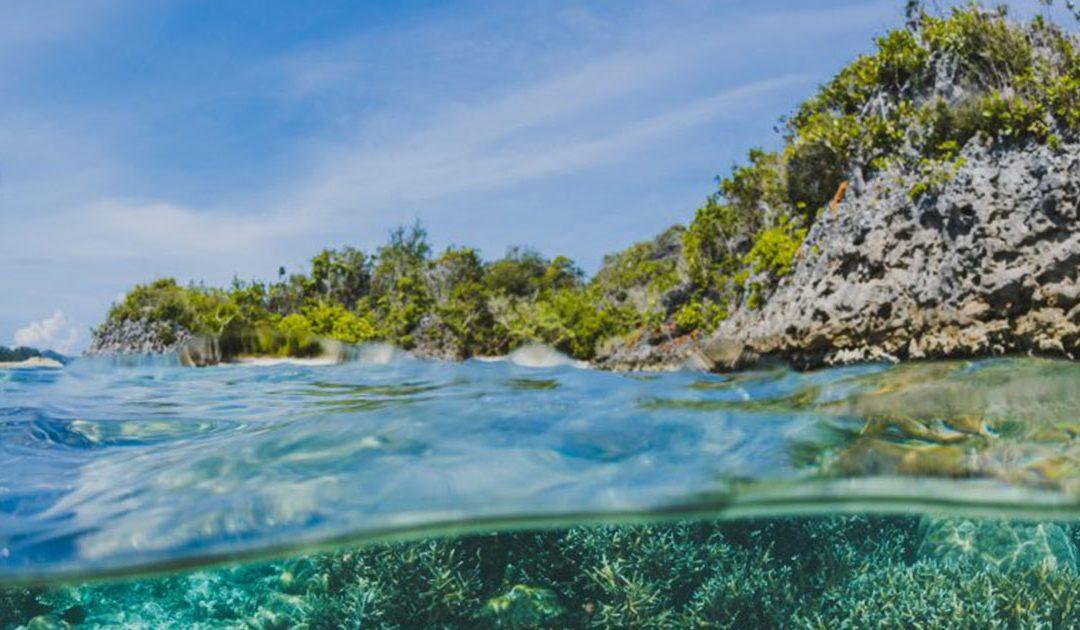 Descubren dos nuevas especies de algas: una de ellas es el cochayuyo chileno